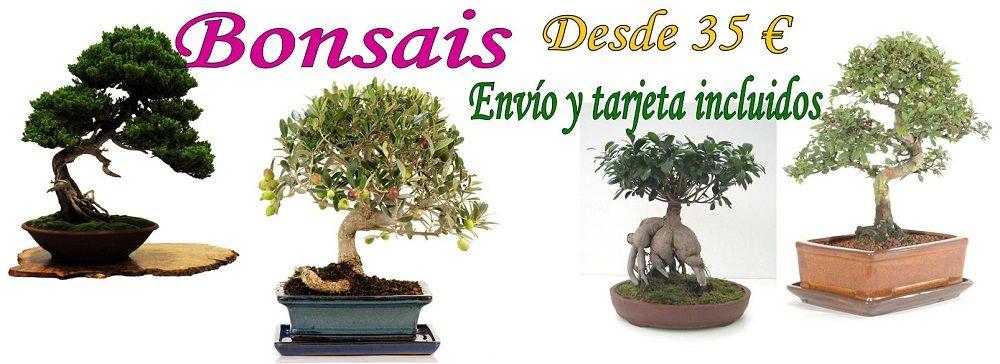 Envío de bonsais a domicilio