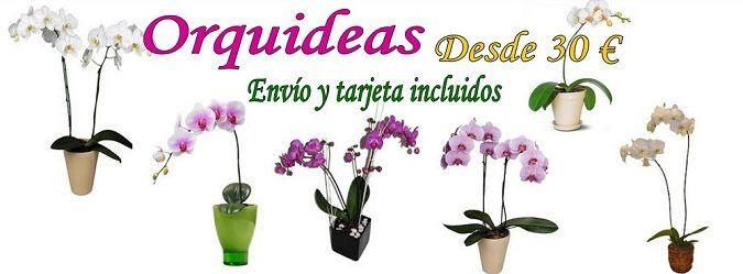 Enviar orquideas