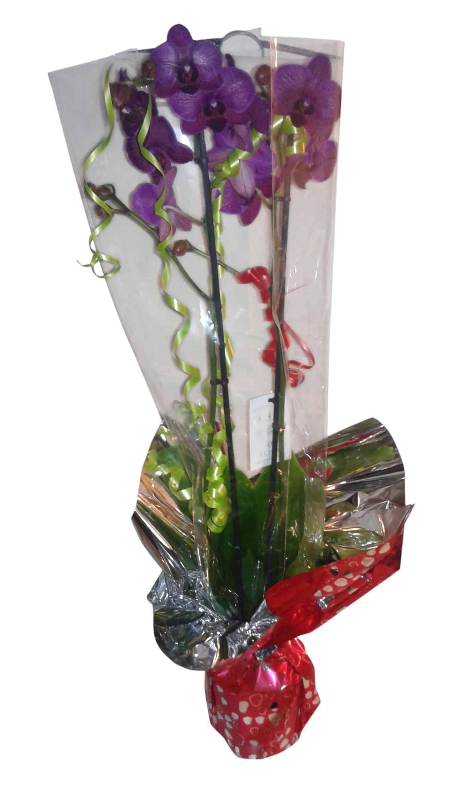 orquidea a domicilio lila