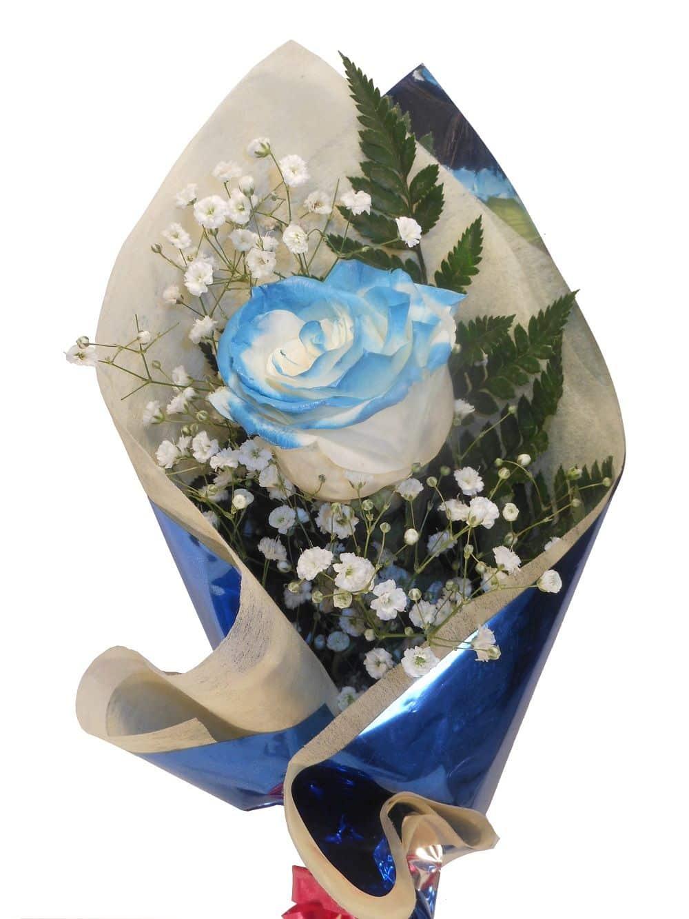rosa azul para enviar